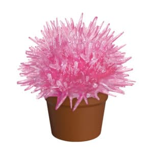 Crystal Cactus Pink